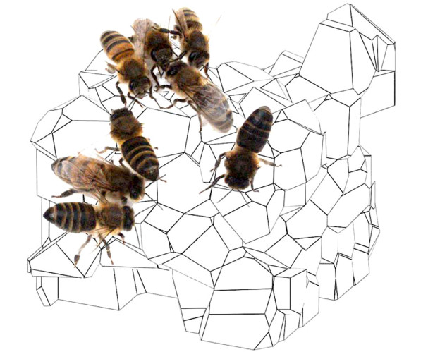 bees on 3D Voronoi diagram
