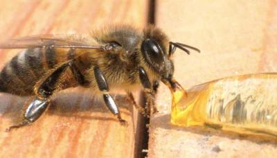 bee-close