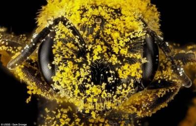 pollenbee