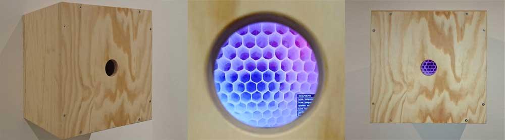 peephole bees