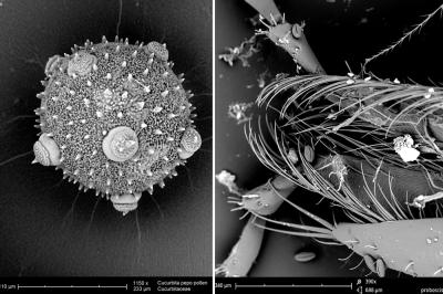 close-pollen
