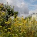 urban-artfarm_rooftopgarden_brussels