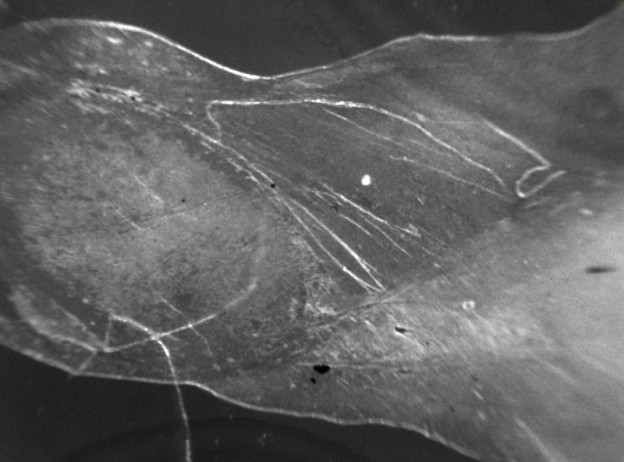 4.microscope-skin